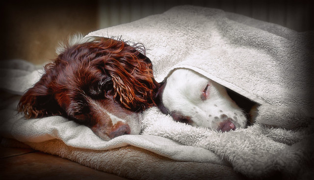 DOG SLEEP TOWEL